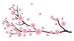Sakura cherry blossom in spring. Cherry blossom, detail of sakura branch. Vector vector illustration