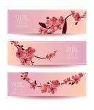 Sakura, Cherry Blossoming Tree Vector Background Illustartion.  Royalty Free Stock Photos