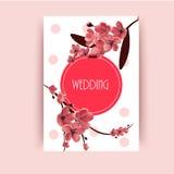 Sakura, Cherry Blossoming Tree Vector Background Illustration. Royalty Free Stock Photography