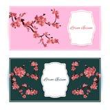 Sakura, Cherry Blossoming Tree Vector Card Illustration.  Stock Photography