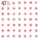 Sakura cherry icon set of 47 flower. EPS 10. Sakura cherry icon set of 47 flower. Cherry Blossoms design parts material. EPS 10 vector file included Royalty Free Stock Photo