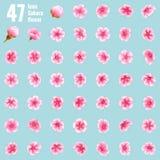 Sakura cherry icon set of 47 flower. EPS 10. Sakura cherry icon set of 47 flower. Cherry Blossoms design parts material. EPS 10 vector file included Stock Photo