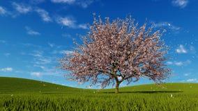 Sakura cherry tree in blossom and falling petals vector illustration