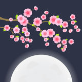 Sakura Cherry Tree on  Sky with Huge Moon Stock Photo