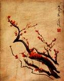 Sakura Cherryblomning med den kinesiska borstemålningen Royaltyfri Foto