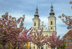 Sakura and church - Miscolc Royalty Free Stock Photography