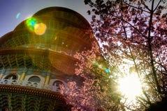 Sakura con il pagoda Fotografie Stock