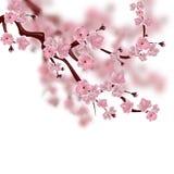 sakura czereśniowy japoński drzewo Gałąź różowy Sakura okwitnięcie pojedynczy białe tło royalty ilustracja