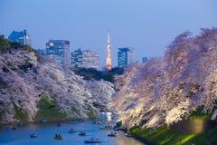 Sakura czereśniowy okwitnięcie zaświeca up i Tokio Basztowy punkt zwrotny przy Chidorigafuchi Tokio Fotografia Royalty Free