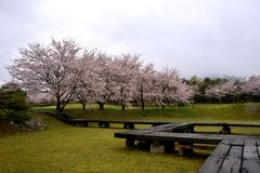 Sakura dans le jardin du parc de porcelaine de Tian, saga-ken, Japon Photos libres de droits