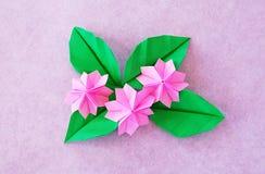 Sakura de papel Imagem de Stock