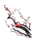 Sakura den körsbärsröda blomningplommonkinesen borstar målning Arkivbild