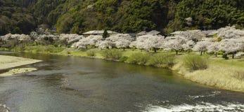 Sakura dentellent des arbres de fleur le long de la rivière de nishiki, Japon photographie stock