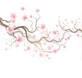 Sakura. Design Background With Sakura Tree Royalty Free Stock Photography