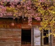 sakura dietro il tetto Fotografia Stock