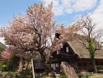 Sakura dom fotografia stock