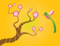 Sakura e colibris Fotografia de Stock Royalty Free