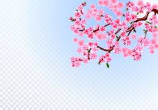 Sakura E Defocus skutek na przejrzystym tle ilustracja ilustracji