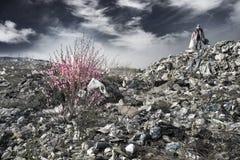 Sakura e l'uomo dell'organismo saprofago fotografie stock