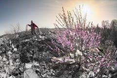 Sakura e l'uomo dell'organismo saprofago immagini stock libere da diritti