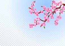 Sakura E na przejrzystym tle ilustracja royalty ilustracja