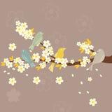 Sakura e pássaros Fotos de Stock Royalty Free