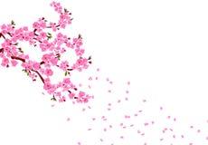 Sakura E r pojedynczy białe tło ilustracji