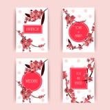 Sakura, ejemplo de Cherry Blossoming Tree Vector Background Imágenes de archivo libres de regalías