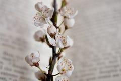 Sakura en boek Royalty-vrije Stock Foto
