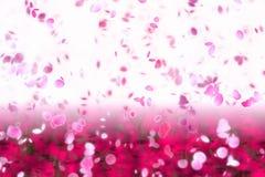 Sakura en la floración Fotografía de archivo libre de regalías