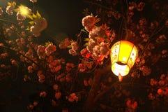 Sakura en la noche y la linterna 2 Foto de archivo libre de regalías