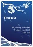 Sakura en la parte posterior del azul Imágenes de archivo libres de regalías