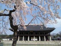 Sakura en palacio imagenes de archivo
