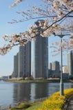 Sakura en Tokio Imágenes de archivo libres de regalías