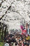 Sakura en Tokio, Japón Foto de archivo