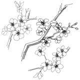 Sakura en un estilo del vector aislado Fotografía de archivo libre de regalías