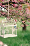 Sakura et la cage avec un oiseau Image stock