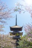 Sakura et tour photo libre de droits