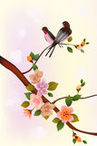 Sakura.Evening in the garden blooming cherry and birds sing Stock Photo