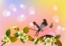 Sakura.Evening in the garden blooming cherry and birds sing Royalty Free Stock Image