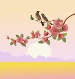 Sakura.Evening in the garden blooming cherry and birds sing Royalty Free Stock Photography