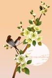 Sakura .Evening in the garden blooming cherry and birds Stock Photo
