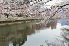 Sakura Festival , Cherry blossom near river , Tokyo, Japan. Stock Images