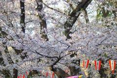 Sakura Festival-Laternen und voll-geblühte Kirschblüten bei Ueno ParkUeno Koen in Ueno-Bezirk von Taito, Tokyo, Japan Lizenzfreie Stockbilder