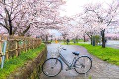 Sakura Festival,Niigata,Japan. Stock Photography