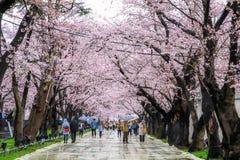 Sakura Festival,Niigata,Japan. Stock Photos