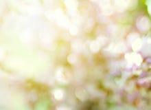 Sakura filial, av en bokeh Royaltyfria Foton