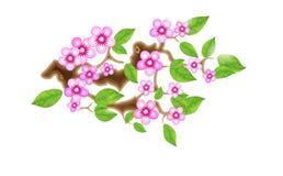 Sakura filial med blommor i animestil, körsbärsröd blomning, illustration Delvist livlig stilistisk lösning in stock illustrationer