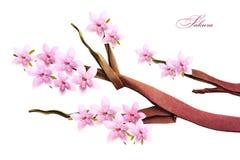 Sakura fjädrar blomningen Fotografering för Bildbyråer