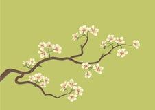 Sakura fleuri illustration stock